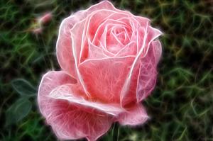 Фрактальный эффект из фотографии розы