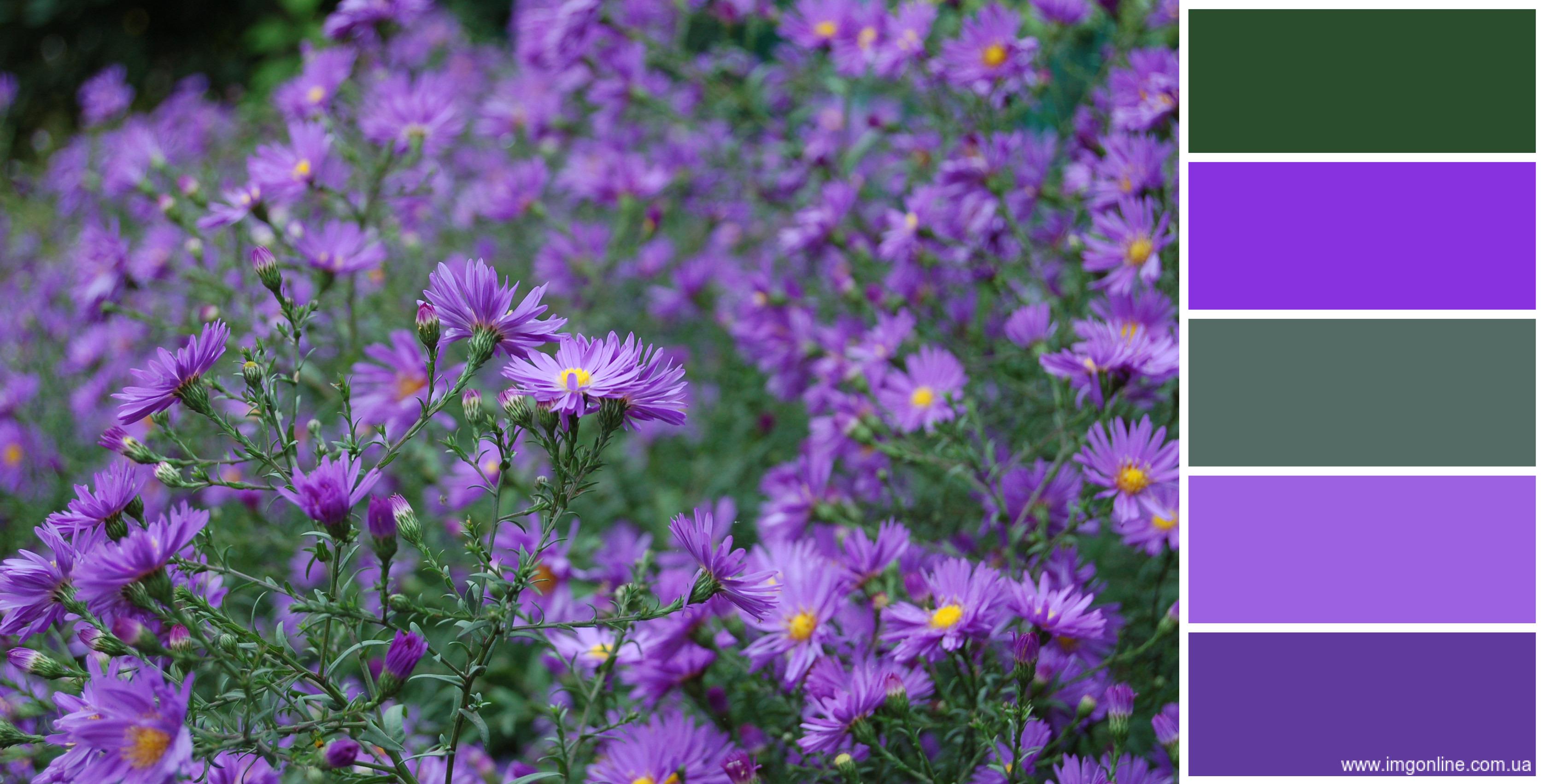 Онлайн палитра цветов