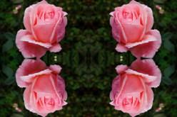 фото отобразить зеркально онлайн