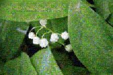 Фото-мозаика из фотографий природы
